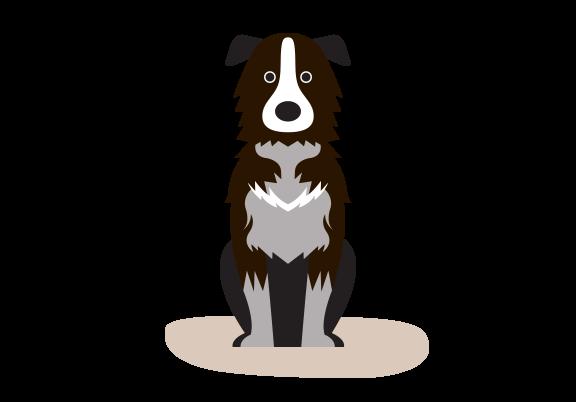 VoffBox - Medium hund